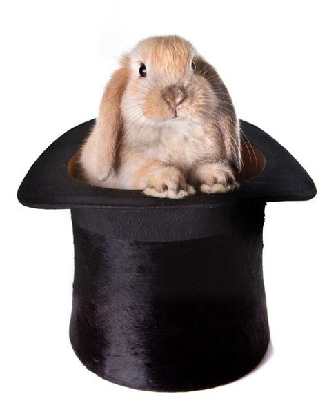 Il vostro coniglio dal cilindro